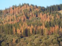 Dead Pines