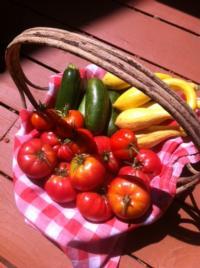 harvesting summer veggies